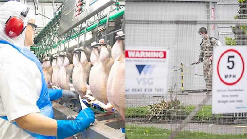 """โควิด : สกอตแลนด์ผงะ """"โรงงานไก่"""" ติดเชื้ออื้อ ส่งกองทัพลุยตรวจคนงานเกือบพัน"""