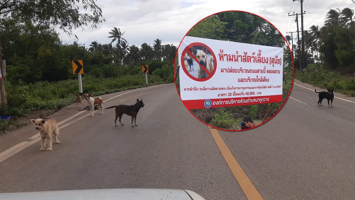ตั้งรางวัลนำจับ คนเอาหมามาปล่อย พบข้างถนนมีกว่า200ตัว เกิดอุบัติเหตุบ่อยครั้ง