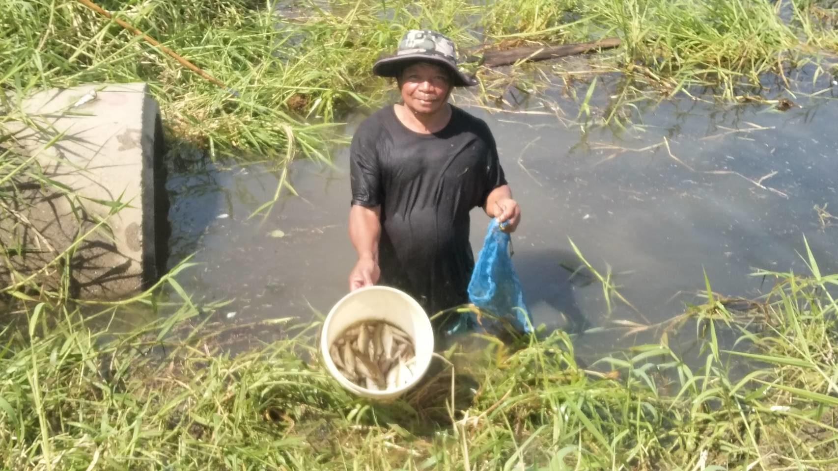ชาวพิมายแตกตื่น ปลาน้ำในคลองตายเกลื่อน สงสัยโรงงาน ปล่อยสารพิษ วอนหน่วยงานที่เกี่ยวข้องตรวจสอบ