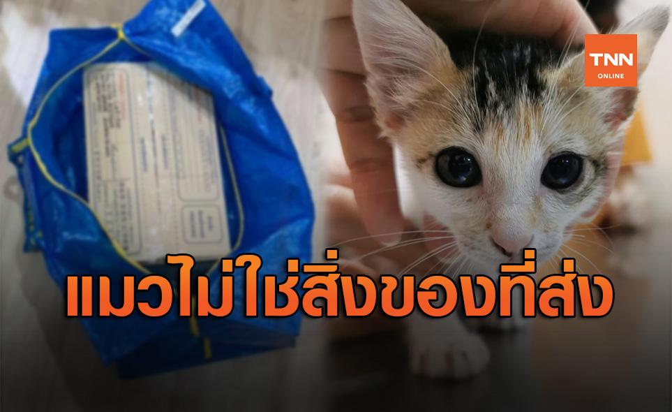 ไม่ใช่สิ่งของที่จะมาส่ง! นำแมวใส่กล่องส่ง Grab ปิดผนึก