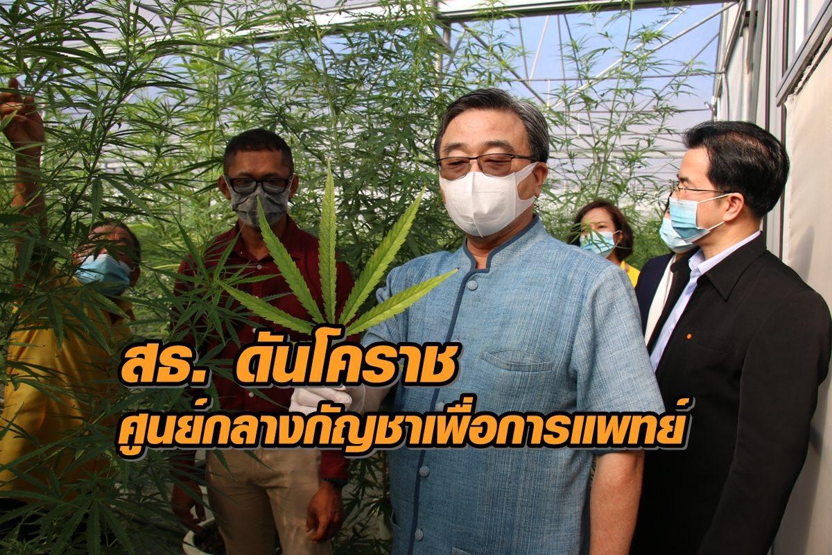 สธ. ดันโคราชเป็นศูนย์กลางกัญชาเพื่อการแพทย์ประเทศไทย ปชช. แห่ฟังแนวทางปลูก (คลิป)