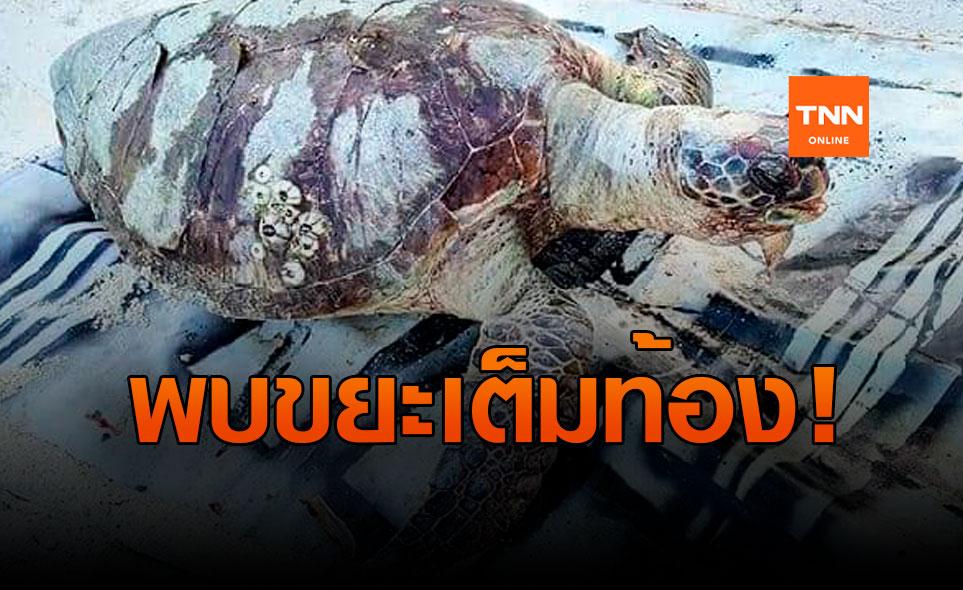 สุดเศร้า! พบซากเต่าตนุเกยตื้น บริเวณหาดสลัด เกาะพะงัน