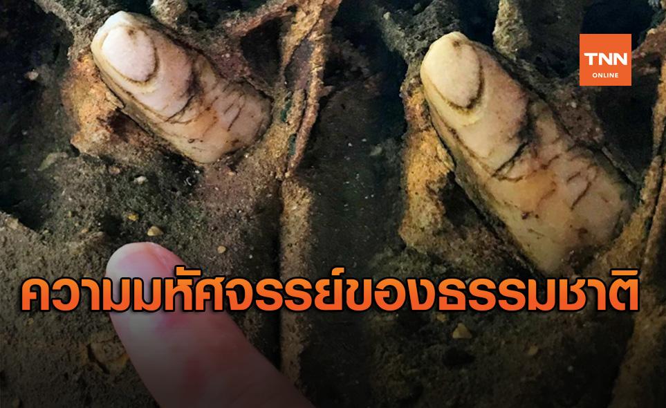 เรื่องราวมหัศจรรย์ที่ธรรมชาติสร้างขึ้น! พบหินคล้ายนิ้ว บนเกาะคอเขา