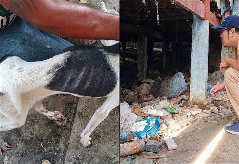 สาวหน้าตาดีค้างค่าเช่าบ้าน 8 เดือน ก่อนหนีทิ้งหมา 10 ตัว บางตัวถูกล่ามโซ่ตายคาบ้าน