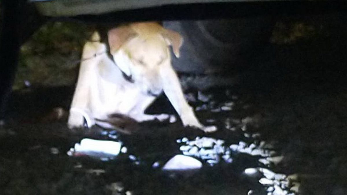 น้องหมา ถูกลวดรัดคอ พยายามวิ่งหนี แต่ลวดดันไปพันติดล้อรถยนต์
