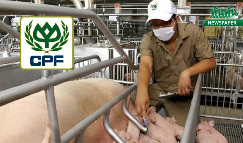 สแกน CPF หลังซื้อกิจการฟาร์มหมูในจีน คาดเพิ่มกำไร 11%