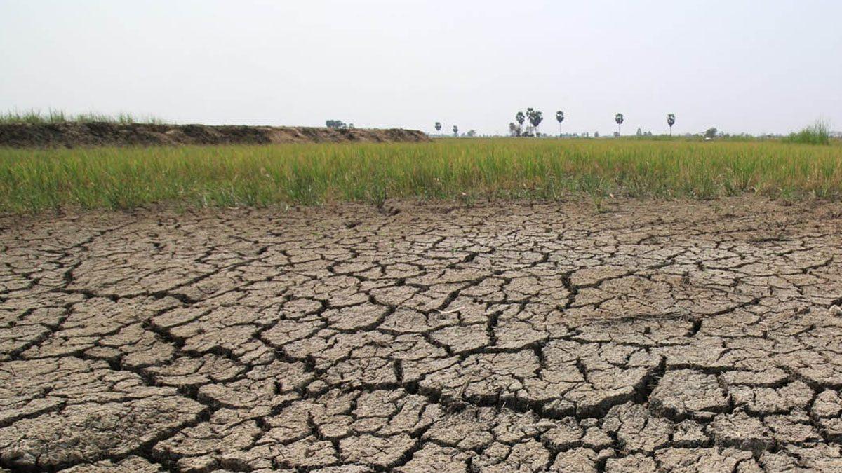 """""""รมว.เกษตร"""" ลั่นน้ำน้อย งดปลูกข้าว เผยน้ำต้นทุนน้อยกว่าปีก่อน 8 พันล้านลบ.ม."""