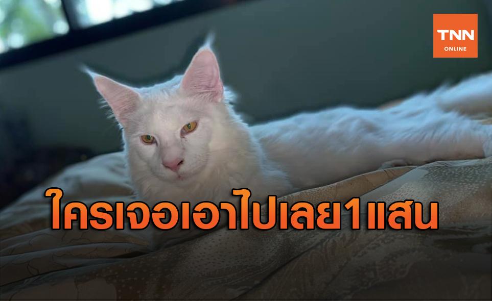 ฝรั่งตามหาแมวหาย ตั้งรางวัลสินน้ำใจ 1 แสนบาท!
