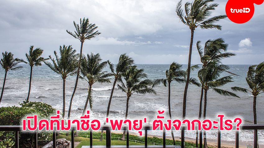 เปิดที่มาชื่อ 'พายุ' ตั้งจากอะไร?