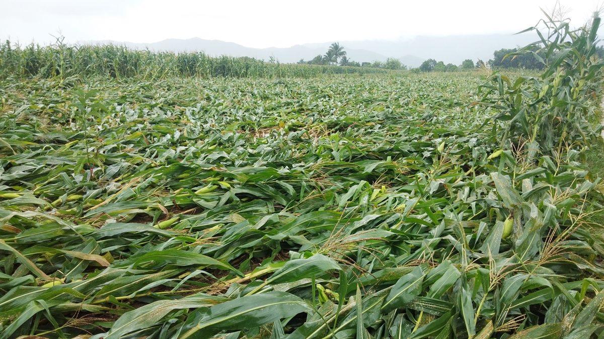 """""""เฉลิมชัย""""สั่งทุกหน่วยเกษตร จัดทีมติดตามโนอึล และเตรียมเข้าช่วยเหลือฟื้นฟูทันที"""