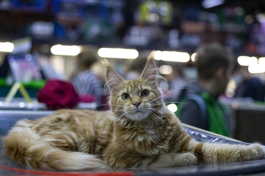 ทาสแมวรวมตัว! ชมความน่ารักของเหล่าน้องเหมียวในงาน 'แคตซาลอน' เปิดฉากคึกคักในรัสเซีย