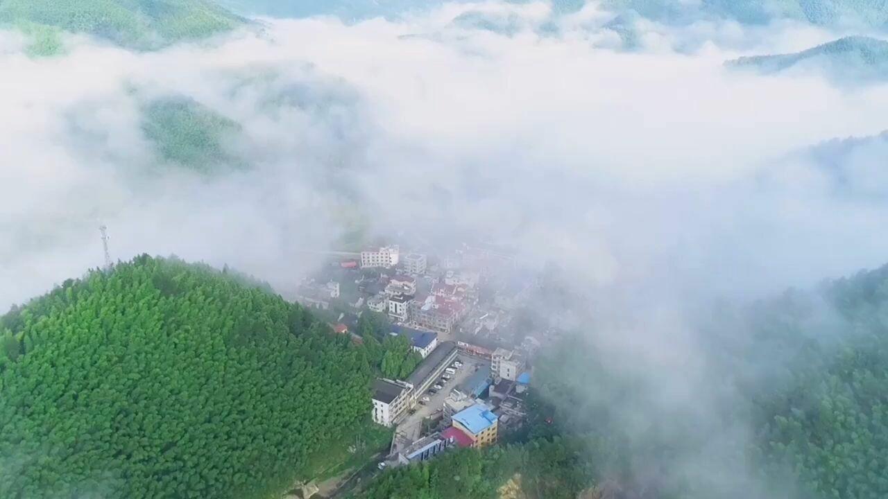 เยือน 'อาณาจักรป่าไผ่' สุดเขียวชอุ่มในหยางหมิงซาน