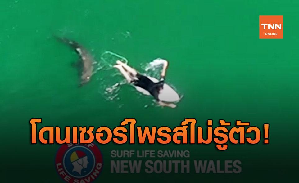 เสียววาบ! ฉลามว่ายน้ำใกล้นักโต้คลื่นไม่รู้ตัว