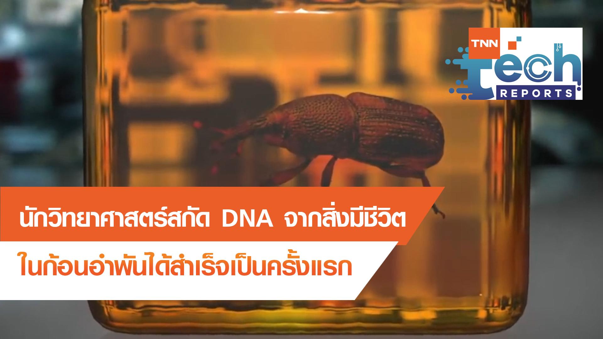 สกัด DNA จากสิ่งมีชีวิตในก้อนอำพันได้สำเร็จ   TNN Tech Reports EP 5   08 ต.ค. 63