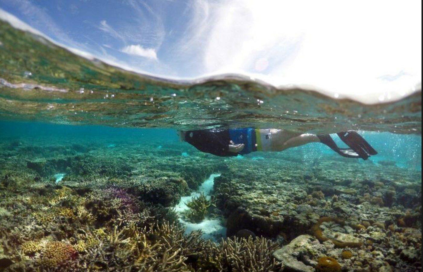 เผยเกรตแบร์ริเออร์รีฟสูญเสียแนวปะการังกว่าครึ่งนับตั้งแต่ปี 2538