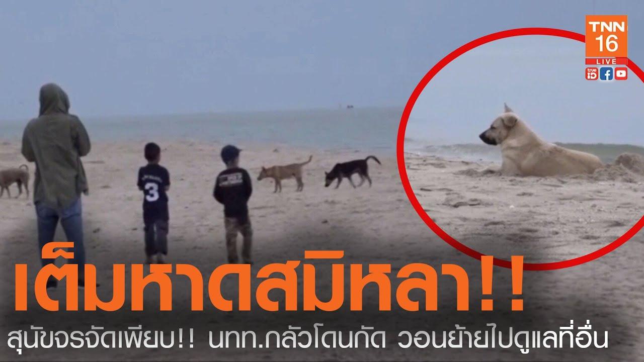 สุนัขจรจัด !!! เต็มหาด แหลมสมิหลา นทท. กลัวโดนกัด (คลิป)