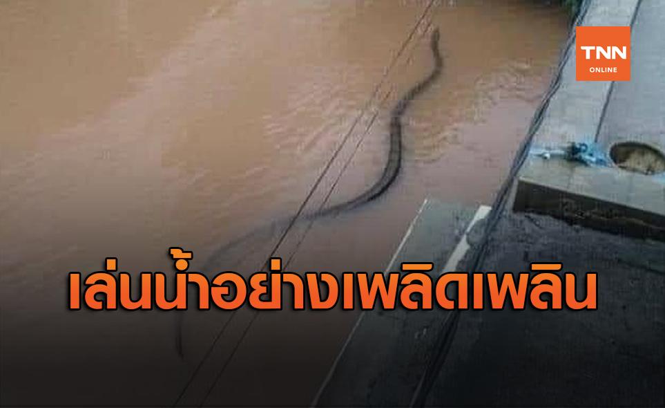 ขนลุก! งูไซส์ยักษ์ ว่ายผ่านหน้าบ้านตอนน้ำท่วม