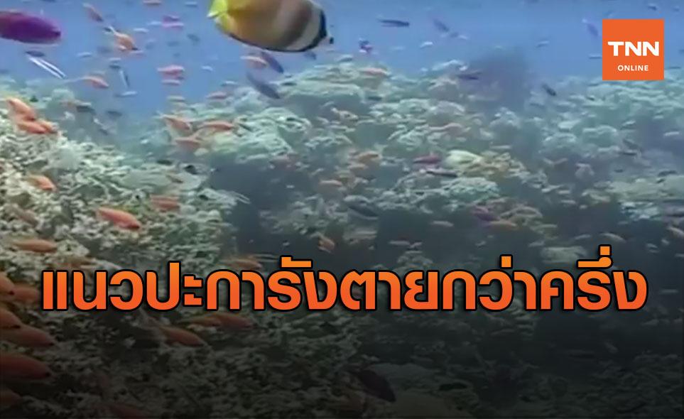 สลด! แนวปะการังใหญ่ที่สุดในโลกตายไปแล้วกว่าครึ่ง