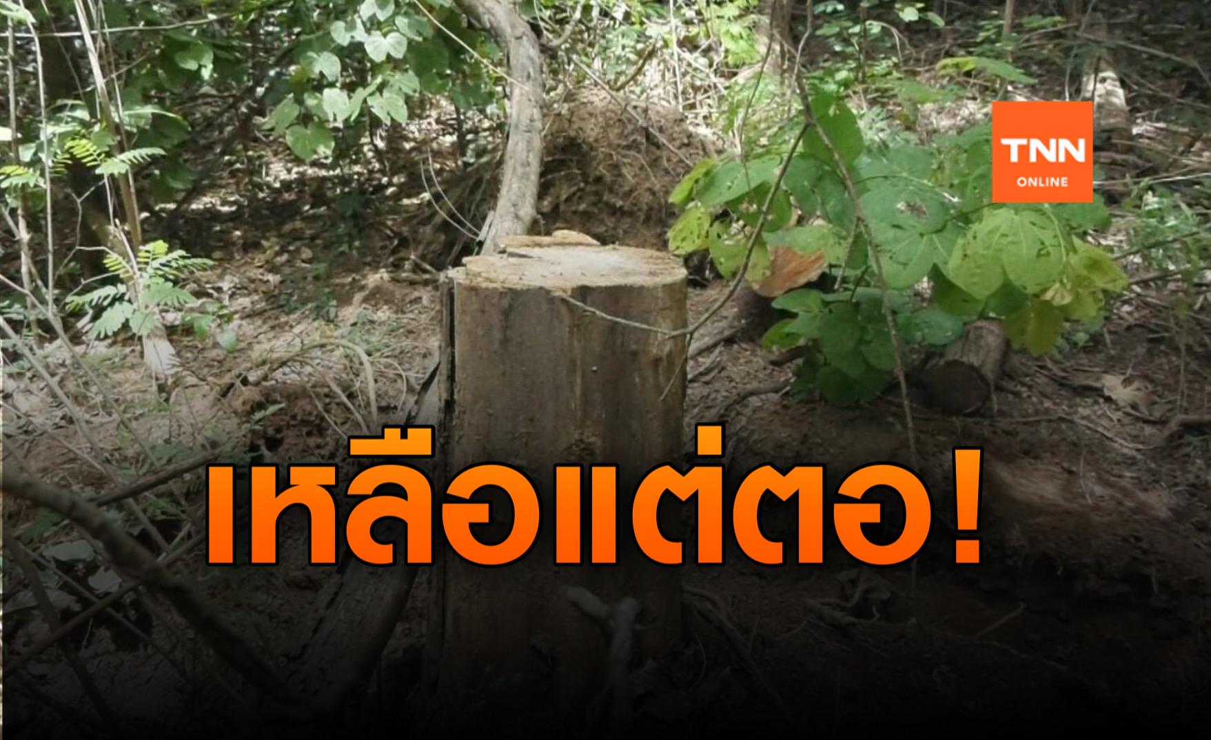 ปทส.บุกตรวจสอบวัดลักลอบตัดไม้ป่าชุมชนส่งขายนายทุน