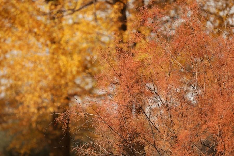 ฤดูใบไม้ร่วงแต่งแต้มสีสัน 'พื้นที่ชุ่มน้ำ' ณ กานซู่