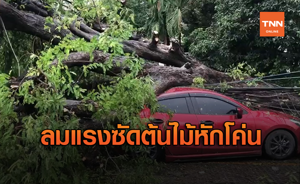 พายุฝนพัดต้นไม้อายุกว่า 50 ปี ล้มทับรถเสียหาย 3 คัน