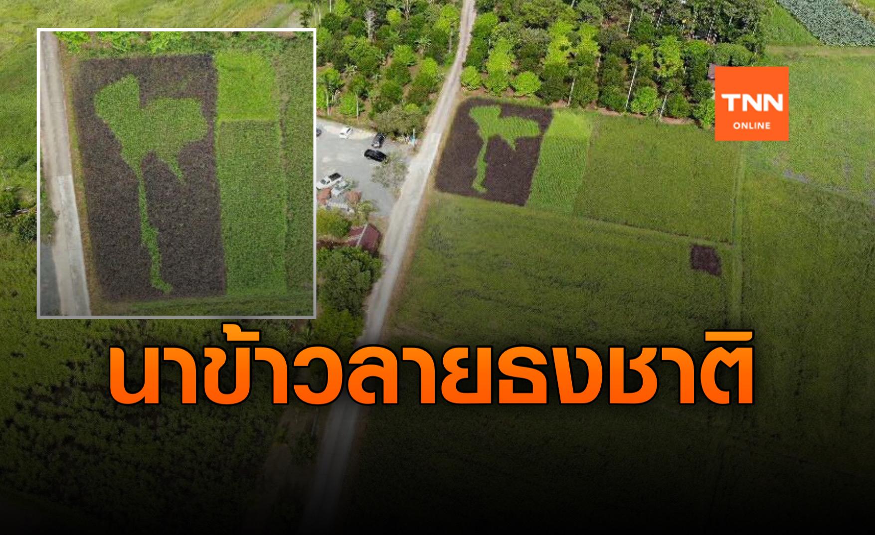 ไอเดียเจ๋ง! นาข้าวประเทศไทย สื่อความอุดมสมบูรณ์