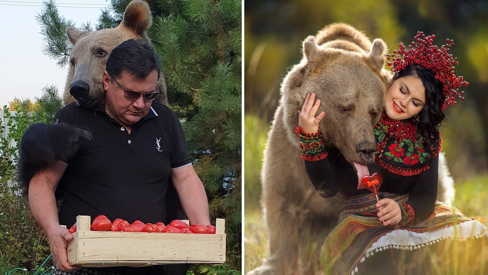 """จากลูกหมีใกล้ตาย สู่ """"หมีนายแบบ"""" ขวัญใจชาวรัสเซีย พี่หมีใจดีเป็นมิตรต่อทุกคน"""