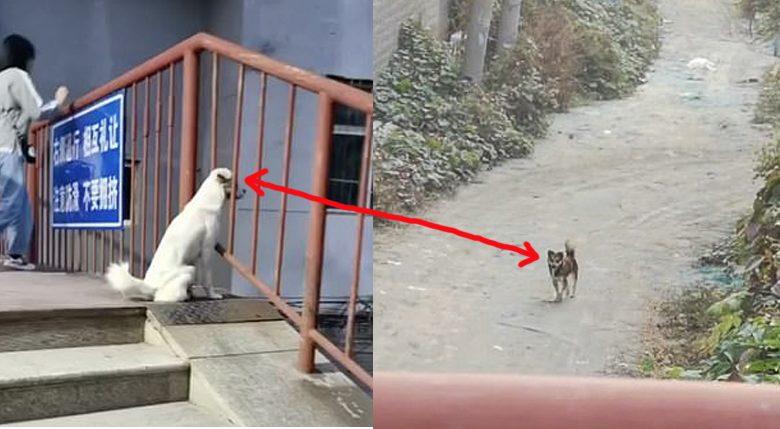 สองหมาเพื่อนซี้ถูกแยก คนละฟากมหาวิทยาลัย ได้แต่จ้องกันทุกวัน