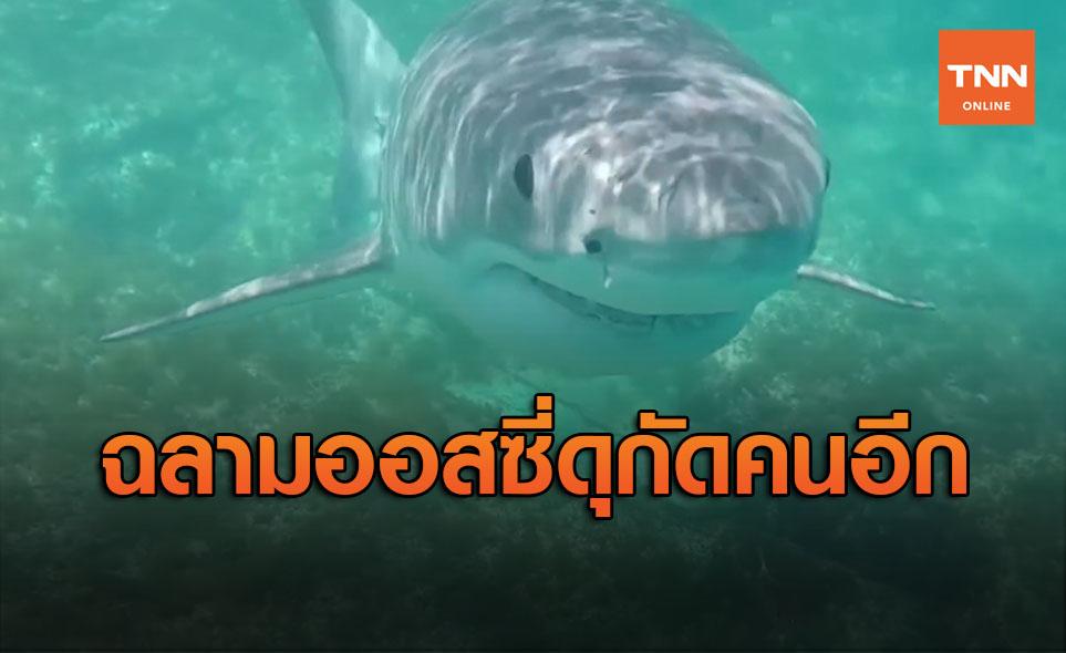 ฉลามปีนี้ดุ! กัดหนุ่มใหญ่ออสซีเจ็บสาหัส