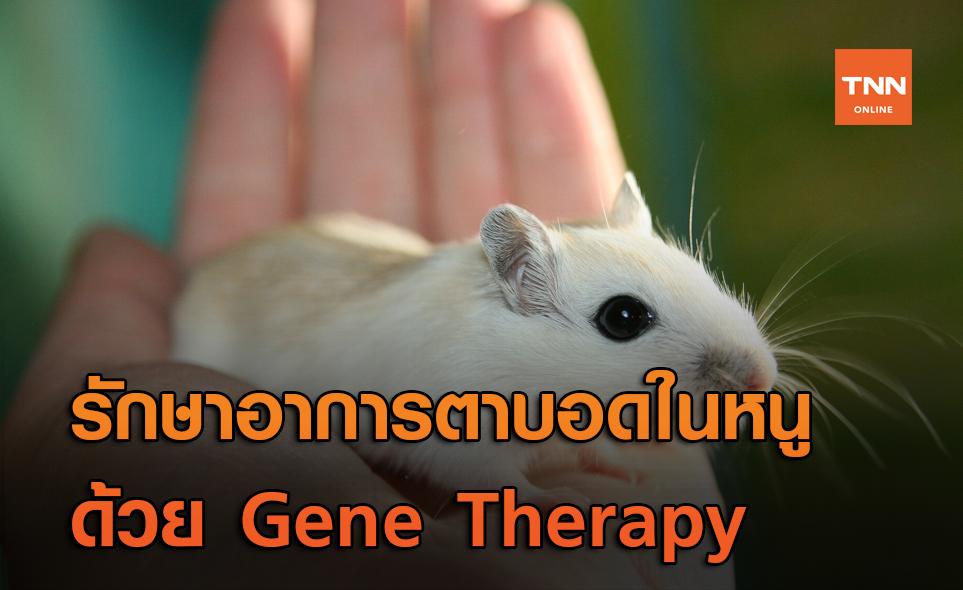 นักวิทย์ฯ รักษาอาการตาบอด (ในหนู) ได้สำเร็จ ด้วย Gene Therapy