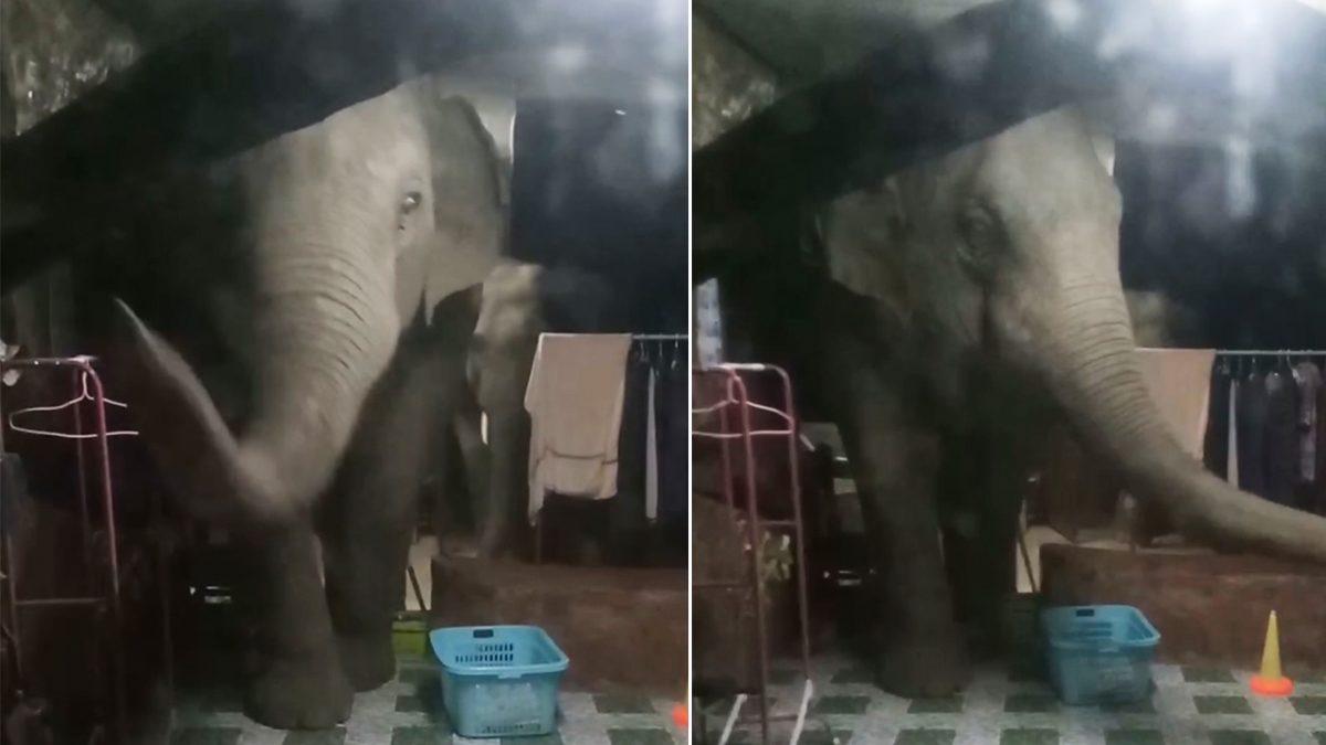 สาวใกล้คลอดผวากลางดึก ช้างป่า 3 ตัว พังรั้วบุกเข้ามาถึงในบ้าน จนท.เร่งผลักดันกลับ