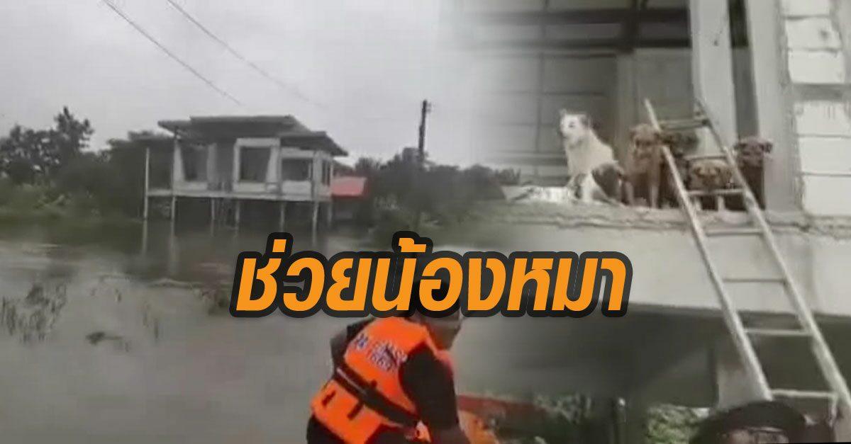 หมาประสบภัยนับ 10 เฮ! กู้ภัยโคราช เข้าช่วยเหลือ หลังหนีน้ำท่วมขึ้นชั้น 2 บ้านกำลังสร้าง