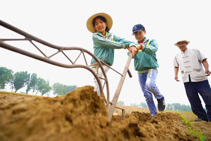 สำรวจเผย ชาวจีนส่วนมากหนุนสอน 'วัฒนธรรมเกษตร' ในโรงเรียน