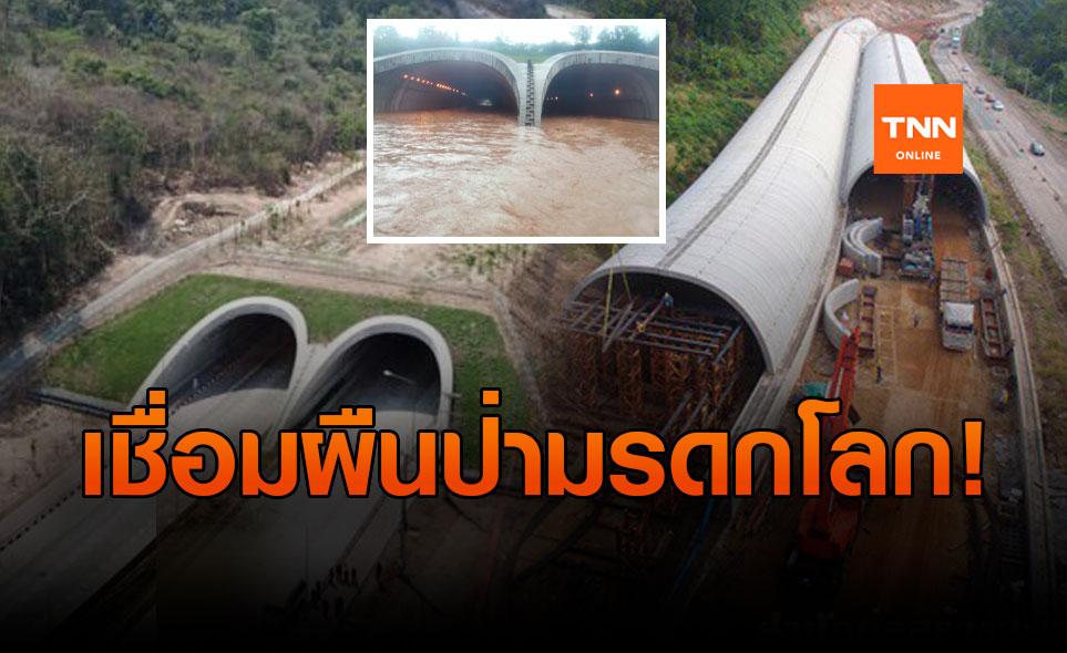 """ทำความรู้จัก! """"อุโมงค์ทับลาน""""  ทางเชื่อมผืนป่ามรดกโลก แห่งแรกของไทย"""