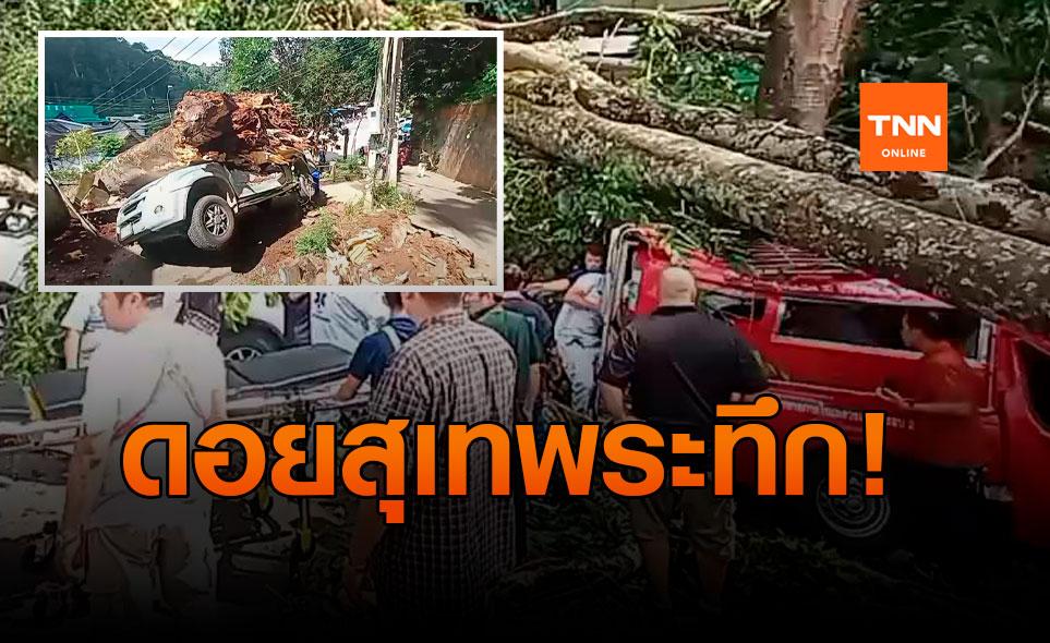 ต้นไม้ใหญ่ดอยสุเทพล้มทับรถ-นักท่องเที่ยวบาดเจ็บ