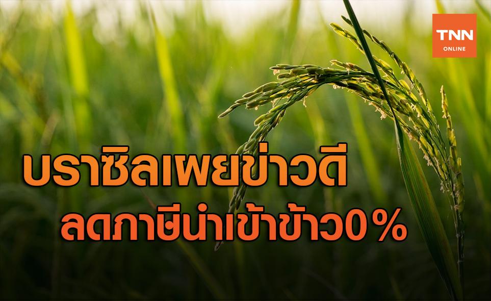 ข่าวดี! บราซิลประกาศลดภาษีนำเข้าข้าว 0% โอกาสทองผู้ส่งออกไทย