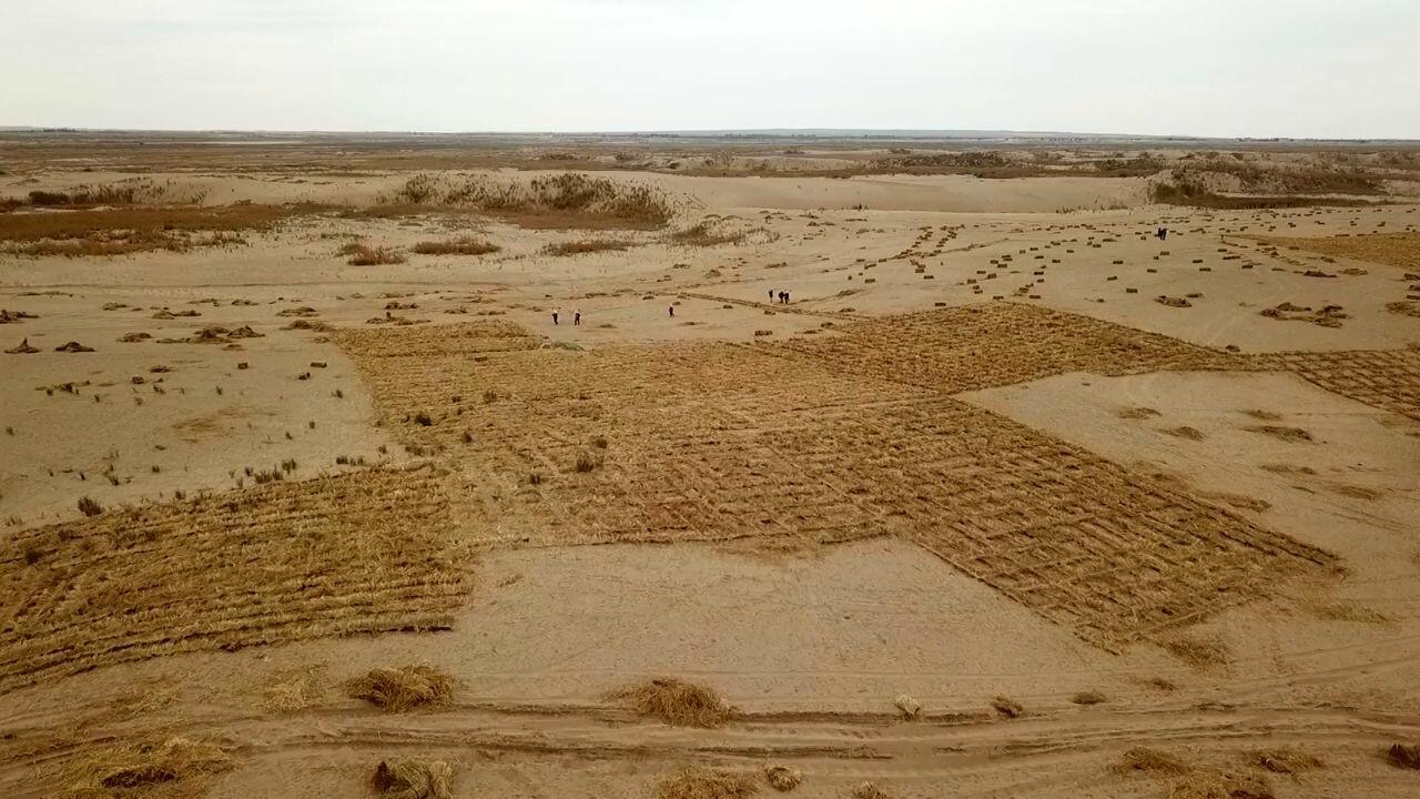 เกษตรกรจีนผุด 'กระดานหมากรุกฟาง' ต่อสู้ทะเลทราย