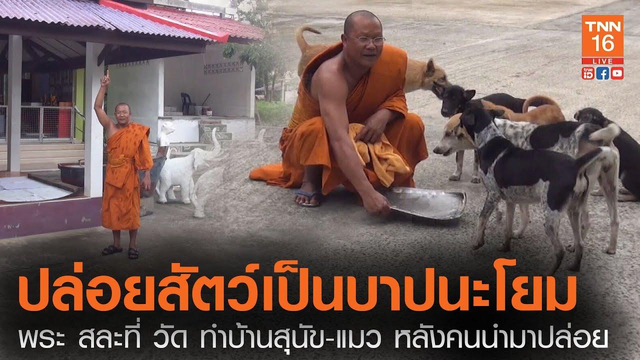 ระวังบาป!! พระ สละที่ วัด ทำบ้านสุนัข-แมว หลังคนนำมาปล่อยจนล้น (คลิป)