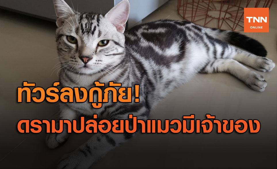 ดรามาสนั่น! กู้ภัยจับแมวหลุดปล่อยป่าสุดท้ายดับ เจ้าของแทบขาดใจ