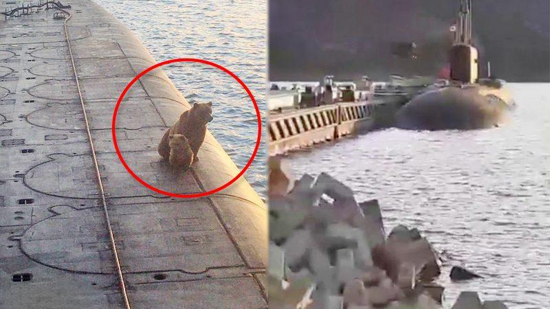 """ทัพรัสเซียสังหาร """"หมีแม่ลูก"""" แวะพักนั่งเรือดำน้ำ-อ้างเป็นภัยต่อชาวบ้าน (คลิป)"""