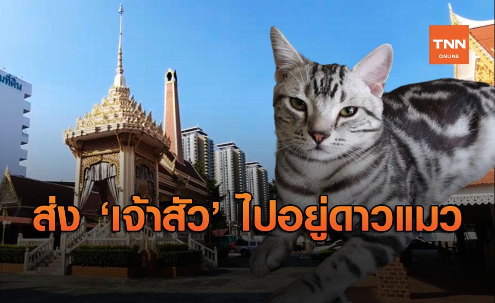 """เผาแล้ว """"เจ้าสัว"""" เจ้าของแมววอน ขอให้เป็นตัวสุดท้าย ย้ำสัตว์ทุกตัวมีชีวิต!"""