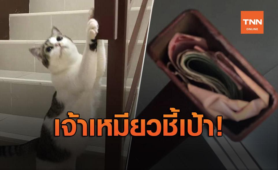 พ่อบ้านโป๊ะแตก! เจ้าเหมียวชี้เป้าที่ซ่อนเงินภรรยา