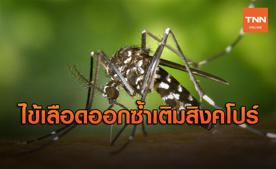 สิงคโปร์ โควิดเริ่มทุเลาแต่เจอ 'ไข้เลือดออก' ระบาดซ้ำ ยอดตายสูงกว่า