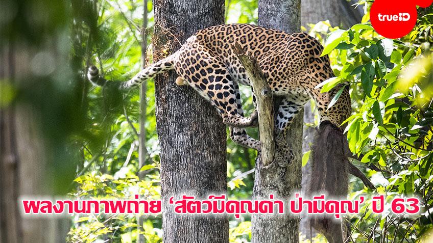 ประกาศผลการประกวดภาพถ่าย 'สัตว์มีค่า ป่ามีคุณ'  ประจำปี 2563