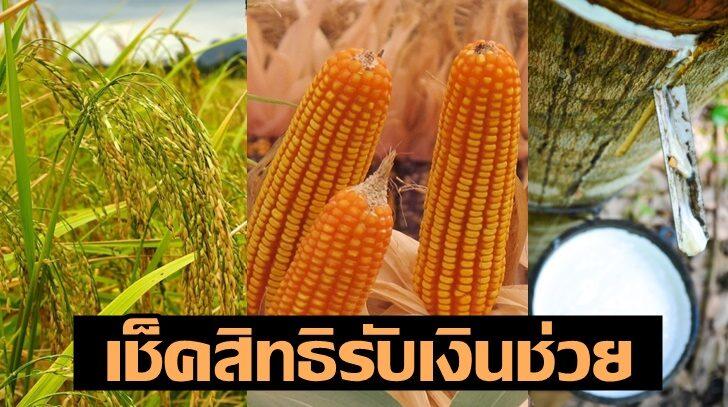 """เกษตรกรเช็คด่วน!! รัฐจ่ายเงินประกันรายได้ """"ข้าว ยางพารา ข้าวโพดเลี้ยงสัตว์"""""""