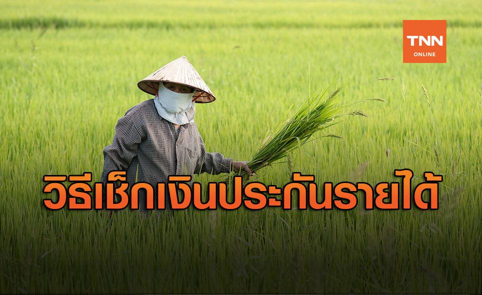 เปิดวิธี ตรวจสอบเงินประกันรายได้ เกษตรกร มีสิทธิได้รับเงินหรือไม่