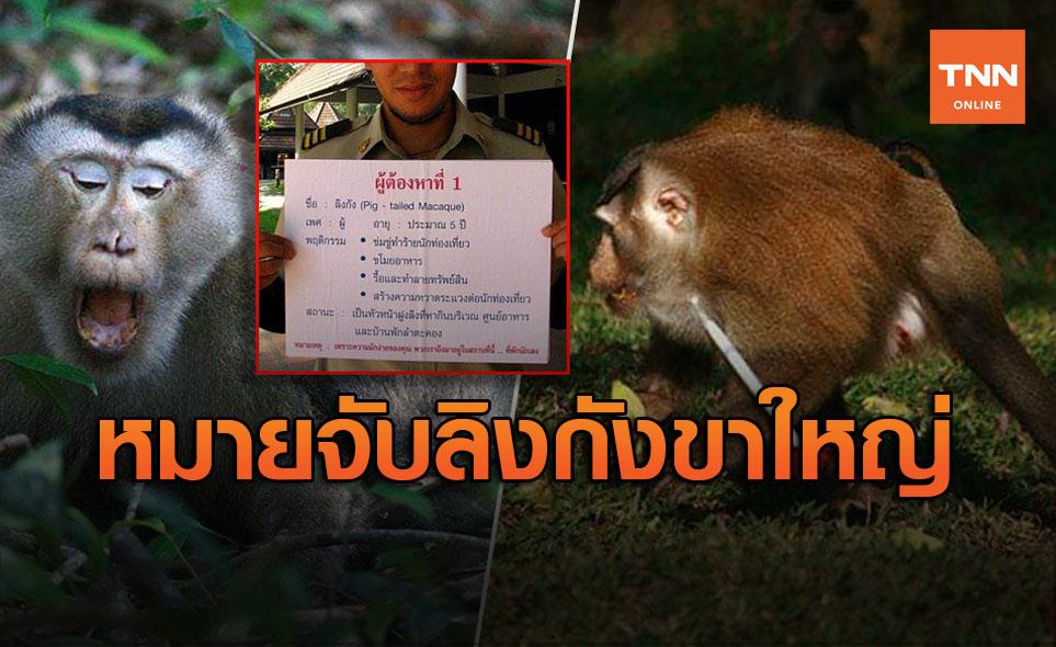 ล่าระทึก! ออกหมายจับรวบจ่าฝูงลิงกังขาใหญ่  แก๊งไม่ยอมบุกชิงตัวลูกพี่หลบหนี