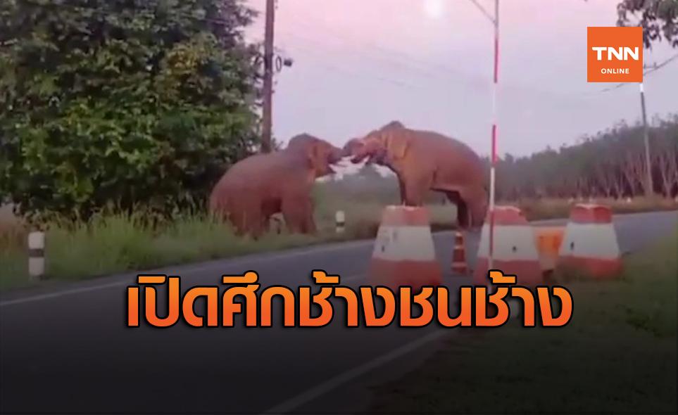 เปิดภาพนาทีระทึก! ช้างป่าตกมันปะทะเดือด บุกรื้อด่านตรวจพังราบ