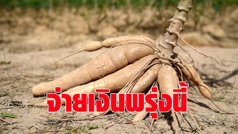 เกษตรกรเฮ! พรุ่งนี้พาณิชย์จ่ายประกันรายได้มันสำปะหลัง วงเงินงบประมาณ 9,788 ล้านบาท