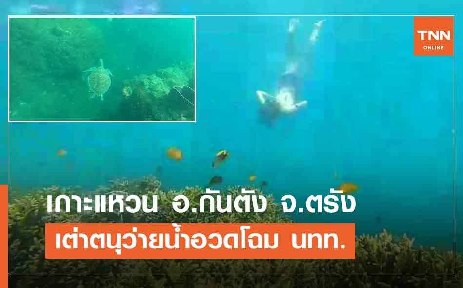 เต่าตนุสีสันสวยงามว่ายน้ำเข้ามาอวดโฉมนักท่องเที่ยว เกาะแหวน อ.กันตัง จ.ตรัง (คลิป)